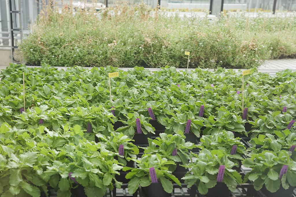Agricultura e Sustentabilidade