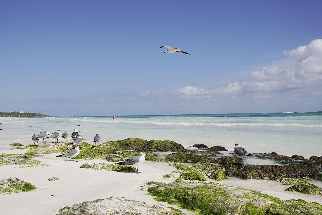 Riviera Maya – TRS Yucatan