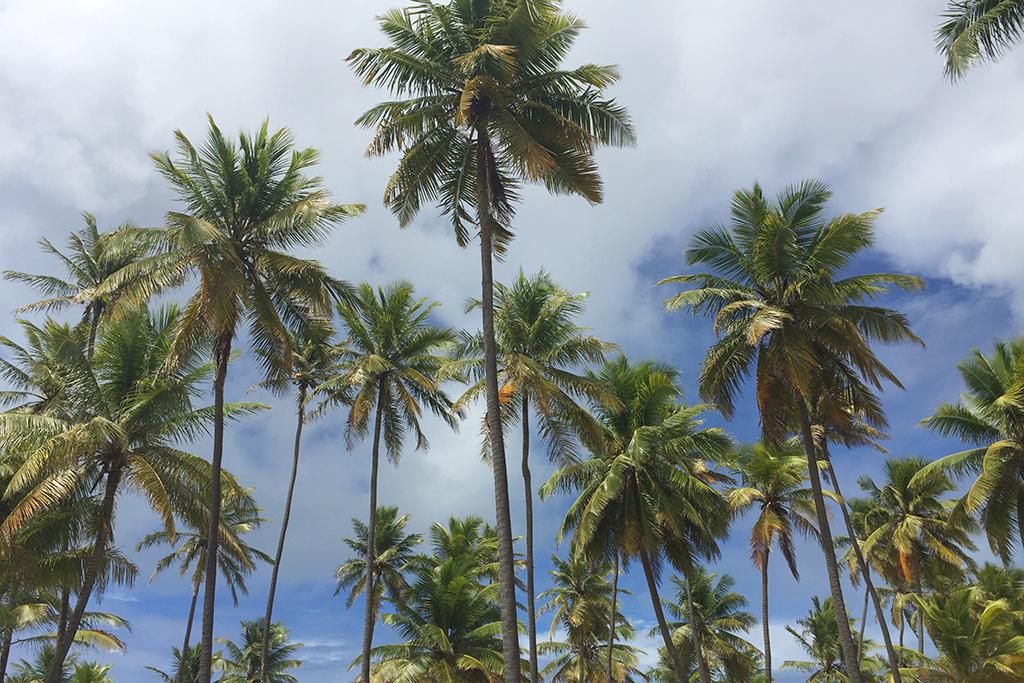 Bahia: Grand Palladium Imbassaí